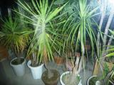 植木が多いマンション引越し